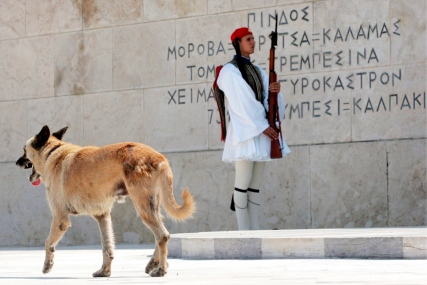 A stray dog passes in front of saluting navy troops at the Monument of the Unknown Soldier in Athens