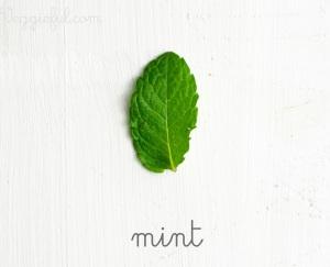 mint leaf herb